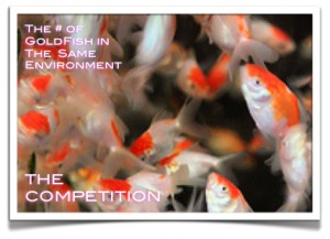 growth of a goldfish competition